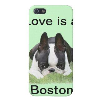 De terriërpuppy van Boston het rusten iPhone 5 Hoesjes