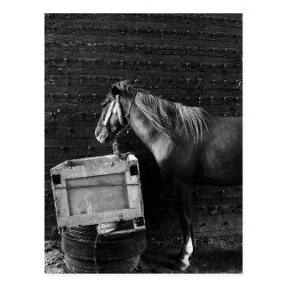 De Tijd van de Onderbreking van het paard Briefkaart