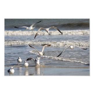 De tijd van de zeemeeuw bij het strand foto afdruk