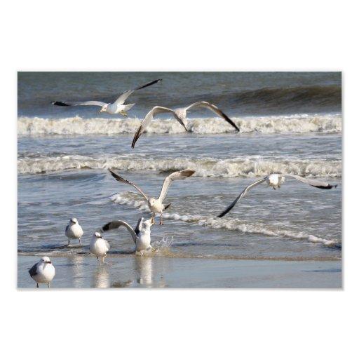 De tijd van de zeemeeuw bij het strand fotoafdruk