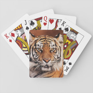 De Tijger van Sumatran, Panthera Tigris Speelkaarten