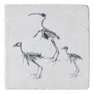 De Treeft van het Skelet van de vogel Trivet