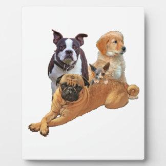 De troep van de hond met kat fotoplaat