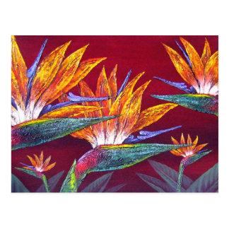 De Tropische Bloem van paradijsvogels - Multi Briefkaart