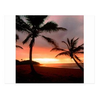 De tropische Dominicaanse Republiek van de Palmen Briefkaart