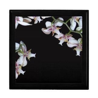 De tropische Orchidee bloeit de BloemenDoos van de Decoratiedoosje