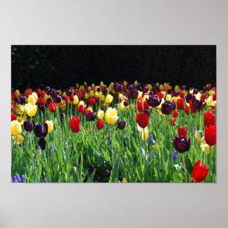 De Tuin van de bloem Plaat