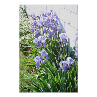 De Tuin van de iris Poster