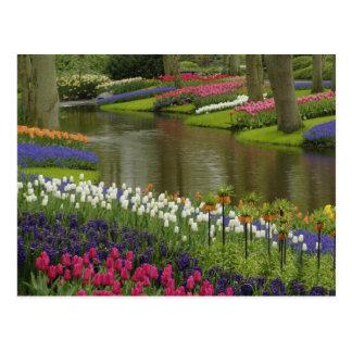 De tuin van de tulp en van de hyacint, Keukenhof Briefkaart