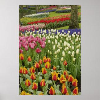 De tuin van de tulp en van de hyacint, Tuinen Keuk Poster