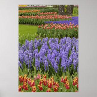 De tuin van de tulp en van de Hyacint, Tuinen Keuk Afdruk