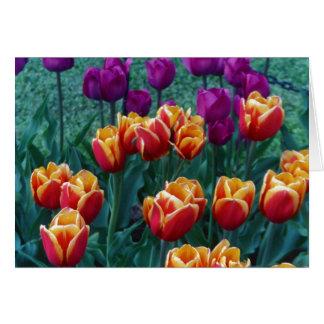 De Tulpen van de lente Kaart