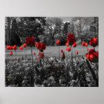 De Tulpen van de rode Lente Afdruk
