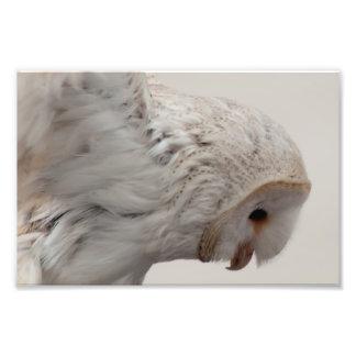 De Uil van de schuur Foto Afdrukken