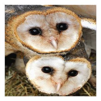 De uilen van de het babyschuur van de douane foto print