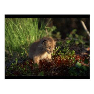 De uiterst kleine Lynx van het Baby Briefkaart