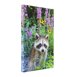 De uitrusting van de wasbeer onder de druk van het canvas print