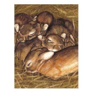 de uitrustingen van babykonijnen in nestart. briefkaart