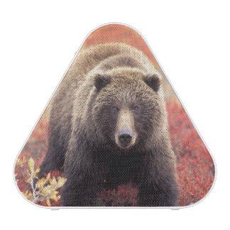 De V.S., Alaska, Denali NP, vrouwelijke Grizzly Luidspreker