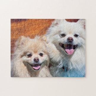 De V.S., Californië. Portret van Twee Pomeranians Foto Puzzels