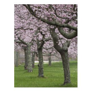 De V.S., New York, het Oosten Hampton. De bomen Briefkaart