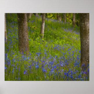 De V.S., Oregon, Salem, Wildflowers onder eiken Poster