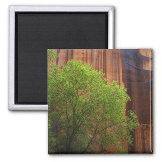 De V.S., Utah, Vermillion van de Canion Paria Klip Magneet