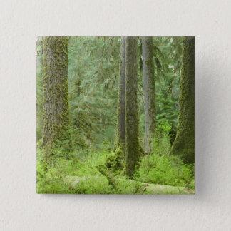 De V.S., Washington, Olympisch Nationaal Park, de Vierkante Button 5,1 Cm