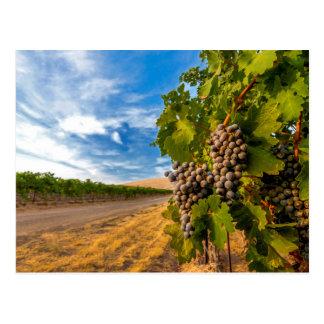 De V.S., Washington, Vallei Yakima. Merlot Druiven Briefkaart