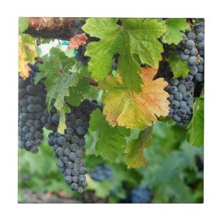De Vallei Napa van de Wijnstokken ~ van de herfst Keramisch Tegeltje