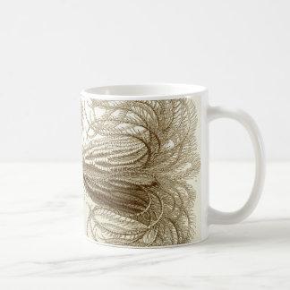 De veersterren van Ernst Haeckel Crinoidea Koffiemok