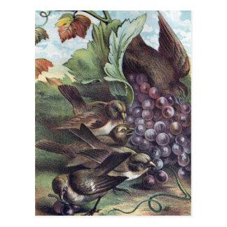 De Victoriaans Illustratie van vogels en van Briefkaart