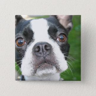 De Vierkante Knoop van het Jong van Boston Terrier Vierkante Button 5,1 Cm