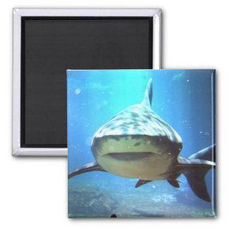 De Vierkante Magneet van de haai