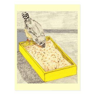 De Vink die van het baby enkel Zaden leren te eten Briefkaart