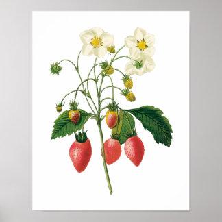 De vintage Aardbeien van het Voedsel van de Bessen Poster