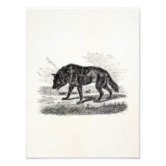 De vintage Amerikaanse Illustratie van de Wolven v