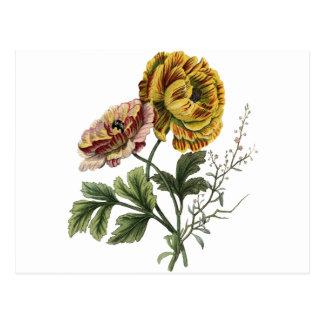 De vintage Bloemen van de Papaver Briefkaart