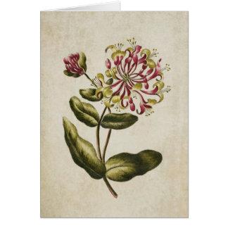 De vintage Botanische BloemenIllustratie van de Briefkaarten 0