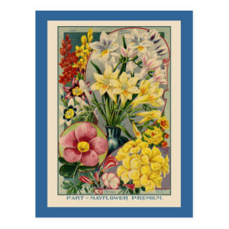 De vintage Catalogus van het Zaad van de Bloem Briefkaart