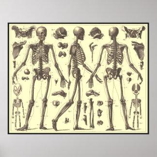 De vintage Diagrammen van het Skelet Poster