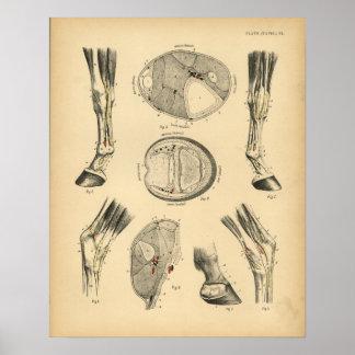 De Vintage Druk van de Anatomie 1908 van de Pezen Poster
