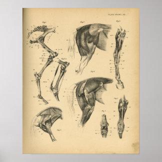 De Vintage Druk van de Anatomie 1908 van de Poster