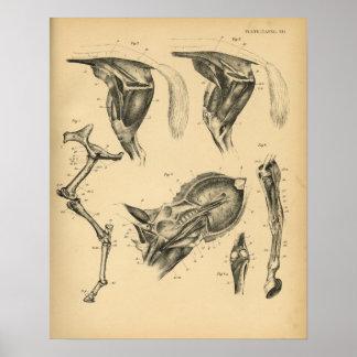 De Vintage Druk van de Anatomie 1908 van de Spier Poster