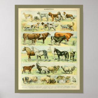 De vintage Druk van de Dieren van het Boerderij Poster