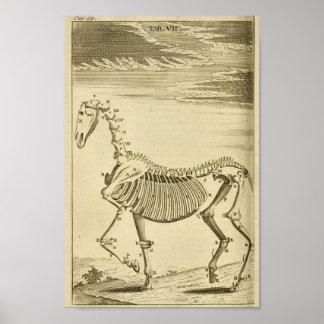 De vintage Druk van de Kunst van de Anatomie van Poster