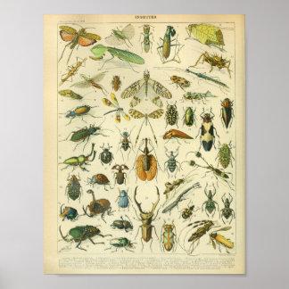 De vintage Druk van de Kunst van het Insect van de Poster