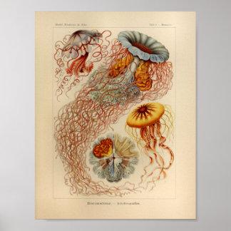 De vintage Druk van Ernst Haeckel van de Kleur van Poster