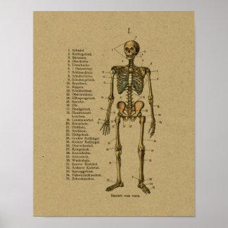 De vintage Duitse Druk van het Skelet van de Poster