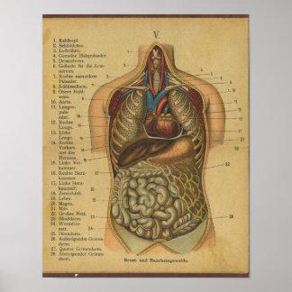 De vintage Duitse Interne Organen van de Druk van Poster